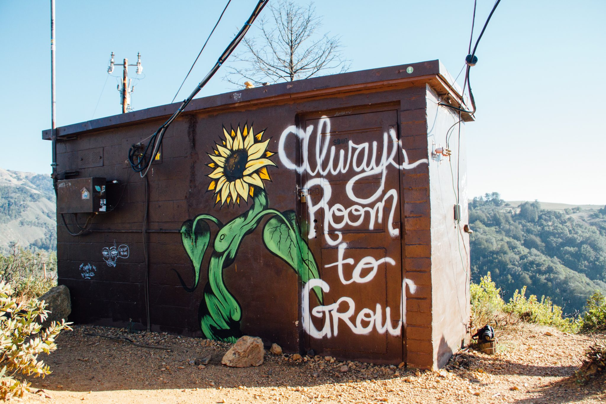 "The small building with sunflower and the quote""Always room to grow"""